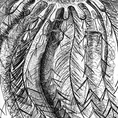 B/W Cactus - Limited Edition Etching - Hand Printed by Cat Among the Pigeons on Folksy