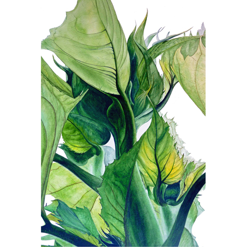 Sunflower Leaves Watercolour Print by Botanics
